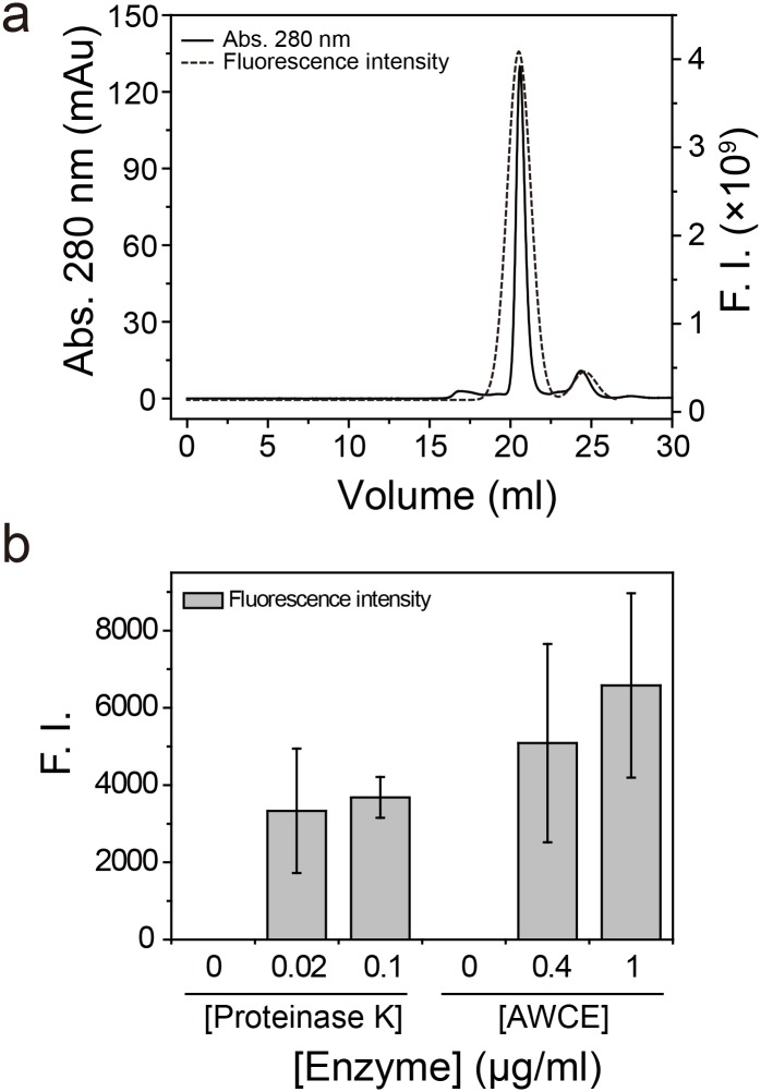 The degree of keratin degradation by AWCE. (A) Purification of fluorescein-5-maleimide (FM)-conjugated Chr27_FK12 β-keratin by Superdex 200 10/300 GL column chromatography. (B) Relative degradation of FM-conjugated Chr27_FK12 by AWCE and proteinase K.