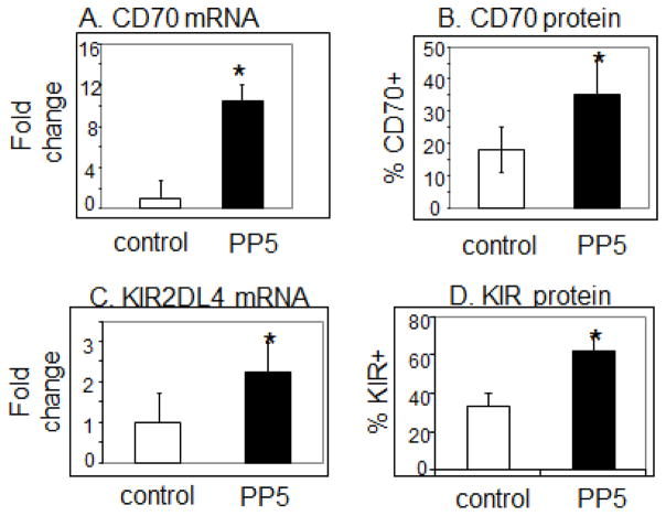 <t>PP5</t> increases CD70 and KIR expression in CD4 + T cells. CD4 + T cells were stimulated with PHA, transfected with the <t>PP5-GFP</t> expression construct then CD70 and KIR mRNA and protein levels were measured 3 days later. A - CD70 mRNA levels. N=7, p=0.03. B - CD70 protein levels. N=3, p