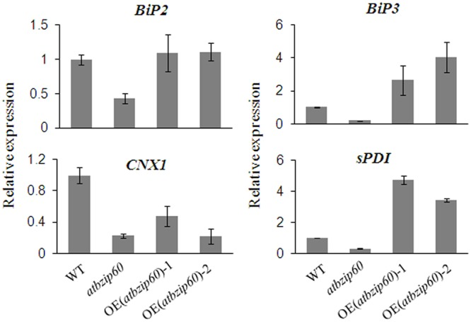 Complementation experiment of Arabidopsis atbzip60 mutant. Complementation of atbzip60 by BhbZIP60S was demonstrated by the expression of UPR genes detected using qRT-PCR. OE(atbzip60)-1 and OE(atbzip60)-2 represent overexpressing BhbZIP60S in atbzip60 background. 18S rRNA was used as an internal reference gene. Data represent the means ± SD of three independent biological replicates.