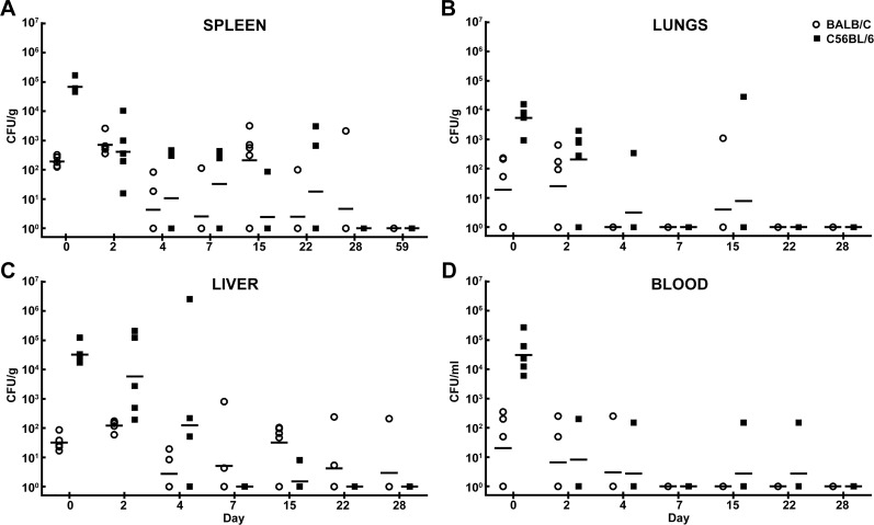 Bacterial burden determined in mice challenged with B . pseudomallei K96243 delivered via the IP route. CFU/g for spleen (A) , lungs (B) , liver (C) and CFU/ml for blood (D) are depicted. The geometric mean for each group is indicated by a horizontal bar. BALB/C mice are depicted with open circles and C57BL/6 mice are depicted with filled squares. N = 5 at each time point.