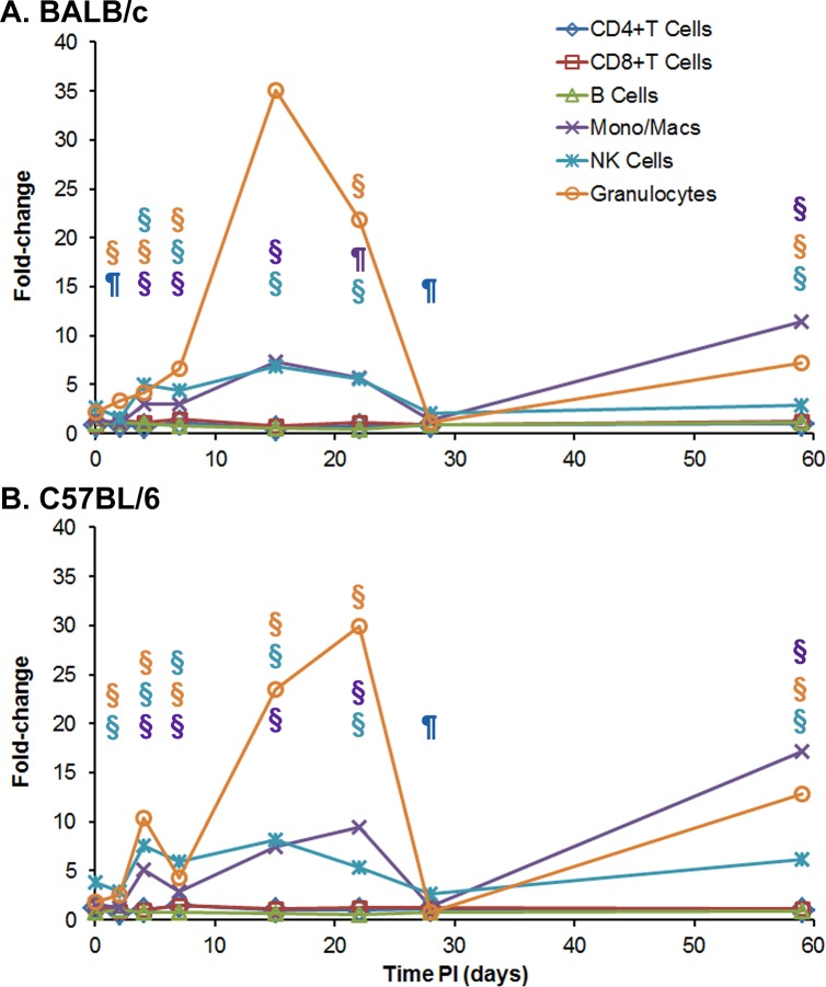 Cellular changes in spleens occurring in BALB/c and C57BL/6 mice after IP infection with B . pseudomallei K96243. Spleen homogenates were prepared from (A) BALB/c and (B) C57BL/6 mice over time after infection, and the percent of each cell type examined was determined. For each mouse strain, N = 5 at each time point. The fold-change for each cell type was determined by dividing the percent of the cell type at each time point ( S2 Table ) by the percent of the cell type present in normal, naïve mice, where N = 10 for BALB/c and N = 4 for C57BL/6 mice. Significant changes in % cell type ( S2 Table ) are shown above the inflammatory cells (macrophages/monocytes, NK cells, and granulocytes) only because they showed the most predominate changes throughout the study. Significant levels compared to the naïve, control mice: ¶ P