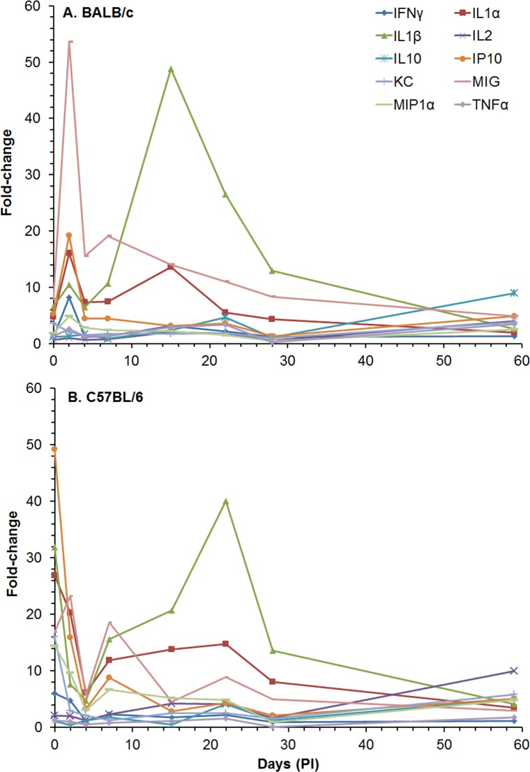 Changes in the amount of cytokines/chemokines in spleen extracts from BALB/c and C57BL/6 mice after IP infection with B . pseudomallei K96243. The amount of cytokines/chemokines present in spleen extracts ( S4 Table ) was determined. Only fold-changes in ten of the cytokines/chemokines are shown for (A) BALB/c and (B) C57BL/6 because they showed the most changes from normal levels after infection or were known to be important for host immunity, such as TNF-α. For each time point, N = 5 for BALB/c and C57BL/6 mice. Fold-changes in cytokines/chemokines was determined by dividing the amount (pg/ml) present in the spleen extract by the amount present in normal, naïve mice, where N = 10 for BALB/c and N = 4 for C57BL/6 mice.