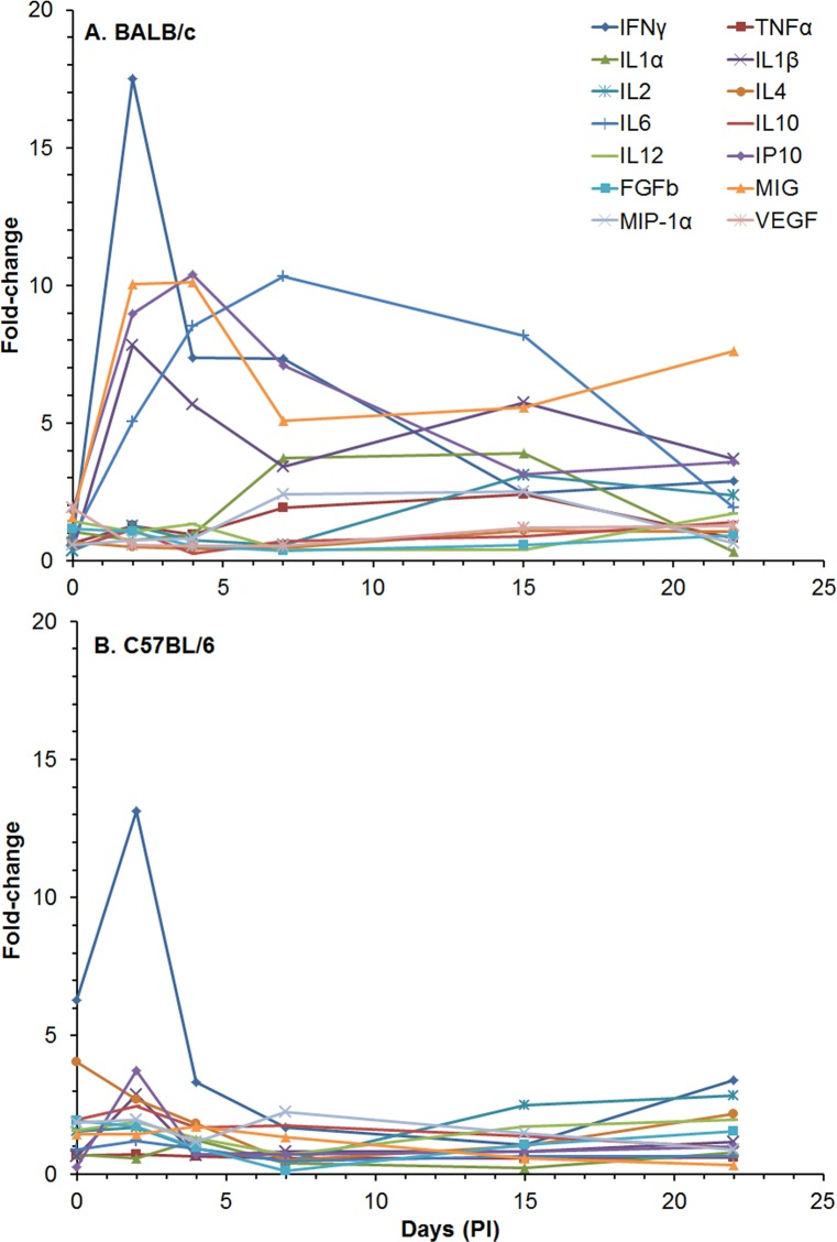 Changes in the amount of cytokines/chemokines in sera from BALB/c and C57BL/6 mice after aerosol exposure to B . pseudomallei K96243. The amount of cytokines/chemokines present in sera ( S7 Table ) was determined. For changes in cytokine/chemokine levels in sera from BALB/c mice (A) , we show changes in levels up to 22 days post exposure because there were no survivors after that period. We also show changes in cytokine/chemokine levels in sera for C57BL/6 mice (B) up to 22 days for comparison and not many significant changes occurred after 22 days in sera from C57BL/6 mice. For each mouse strain N = 5 at each time point. Fold-changes in cytokines/chemokines were determined by dividing the amount (pg/ml) present in sera of exposed mice ( S7 Table ) by the mount present in normal, naïve mice, where N = 10 for BALB/c and N = 4 for C57BL/6 mice. For C57BL/6 mice fold-change for MIG was not shown because it was very high (235-fold), and it would make obscure the changes in the levels of the other cytokines/chemokines at the same time.