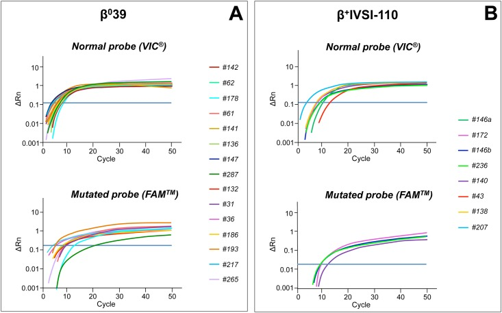 Amplification curves obtained by β 0 39 or β + IVSI-110 genotyping assays from circulating DNA extracted from maternal plasma. Real-time <t>PCR</t> with β 0 39 (A) or β + IVSI-110 (B) genotyping assays, containing a normal probe (VIC ® , upper panels) and a mutated probe (FAM ™ , lower panels) were performed for circulating DNA extracted from maternal plasma where the father was a carrier of β 0 39 (A) or β + IVSI-110 (B) thalassemia mutation, respectively. The plots show the ΔRn values as a function of the number of amplification cycles, while the threshold line is drawn in blue. Samples are listed according to increasing gestational ages. In panel (B), #146a and #146b refer to samples collected from the same pregnant woman (number 146) at different gestational ages: 5 weeks and 10 weeks, respectively. The amplification was performed by using the <t>StepOne</t> ™ Real-Time PCR System (Applied Biosystems ® —Thermo Fisher Scientific).