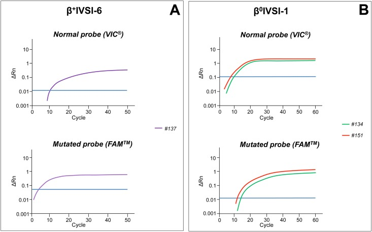 Amplification curves obtained by β + IVSI-6 or β 0 IVSI-1 genotyping assays from circulating DNA extracted from maternal plasma. Real-time PCR with β + IVSI-6 (A) or β 0 IVSI-1 (B) genotyping assays, containing a normal probe (VIC ® , upper panels) and a mutated probe (FAM ™ , lower panels), were performed for circulating DNA extracted from maternal plasma where the father was a carrier of β + IVSI-6 (A) or β 0 IVSI-1 (B) thalassemia mutation, respectively. The plots show the ΔRn values as a function of the number of amplification cycles, while the threshold line is drawn in blue. Samples are listed according to increasing gestational ages. The amplification was performed by using the StepOne ™ Real-Time PCR System (Applied Biosystems ® —Thermo Fisher Scientific).