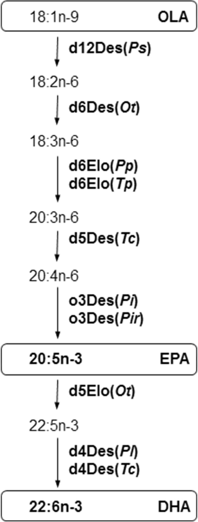 A pathway involving two elongation steps and five desaturation steps allows production of EPA (20:5n-3) and DHA (22:6n-3) from oleic acid (OLA, 18:1n-9). In this pathway seven desaturase enzymes (Des) and three elongase enzymes (Elo), further described in Table 1 , modify fatty acid substrates that are covalently bound to a carrier (e.g. coenzyme A or phosphatidylcholine). Shown is a simplified route for synthesis of DHA that only describes a fatty acid moiety, but not the acyl-carrier, that is recognized by each enzyme