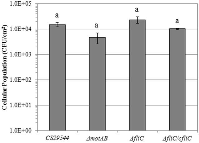 Biofilm formation on polyvinyl chloride of CS29544 and select gene knockout and complementation strains . Experiment is mean ± standard error of three independent replicates. Gene knockouts: Δ motAB and Δ fliC and FliC complement: Δ fliC /fliC. Values with no letters in common are significantly different ( P