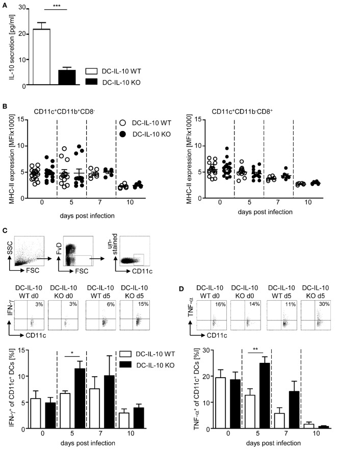 Inactivation of IL-10 in IL-10 flox/flox /CD11c-cre mice results in enhanced IFN-γ and TNF-α production of CD11c + dendritic cells (DCs) during Plasmodium yoelii infection . (A) IL-10 secretion of LPS-stimulated CD11c + DCs isolated from spleen of IL-10 flox/flox (DC-IL-10 WT) and IL-10 flox/flox /CD11c-cre (DC-IL-10 KO) was analyzed by Luminex technology. IL-10 flox/flox and IL-10 flox/flox /CD11c-cre mice were infected with P. yoelii . At indicated time points postinfection, (B) the expression level (MFI) of MHC-II was analyzed on gated CD11c + CD11b + CD8 − DCs and CD11c + CD11b − CD8 + DCs, and the (C) frequencies of IFN-γ and (D) TNF-α-expressing CD11c + DCs were determined by flow cytometry. The gating strategy of CD11c + DCs and representative dot plots are shown in the upper panel. Results from at least two independent experiments with n = 6–16 mice per time point were summarized as mean ± SEM. Student's t -test was used for statistical analysis (* p