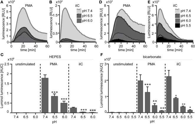 Extracellular acidosis leads to decreased phorbol myristate acetate (PMA)- and immobilized immune complex (iIC)-induced reactive oxygen species (ROS) production in N -2-hydroxyethylpiperazine- N ′-2-ethanesulfonic-acid (HEPES)- and bicarbonate-buffered media . Neutrophils (2 × 10 6 /ml) were preincubated for 30 min under bicarbonate- or HEPES-buffered conditions at pH 7.4, 6.5, 6.0, and 5.5 and were then stimulated with PMA, iIC, or left untreated. Real-time analysis of intra- and extracellular myeloperoxidase-dependent ROS was monitored by using the luminol-assay for 1 h at 37°C (under CO 2 for bicarbonate-buffered conditions). (A,B,D,E) Representative real-time kinetics and (C,F) area under the curve (AUC) values (mean ± SEM) of ROS-dependent chemiluminescence intensities (RLUs). n = 3–9 independent experiments (* p