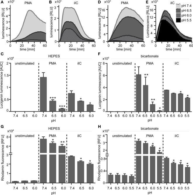 Extracellular acidosis leads to decreased phorbol myristate acetate (PMA)- and immobilized immune complex (iIC)-induced superoxide production in N -2-hydroxyethylpiperazine- N ′-2-ethanesulfonic-acid (HEPES)- and bicarbonate-buffered media . Neutrophils (2 × 10 6 /ml) were preincubated for 30 min under bicarbonate- or HEPES-buffered conditions at pH 7.4, 6.5, 6.0, and 5.5 and were then stimulated with PMA, iIC, or left untreated. (A–F) Real-time analysis of extracellular superoxide was monitored by using the lucigenin assay for 1 h at 37°C (under CO 2 for bicarbonate-buffered conditions). (A,B,D,E) Show representative real-time kinetics and (C,F) area under the curve (AUC) values (mean ± SEM) of reactive oxygen species (ROS)-dependent chemiluminescence intensities (RLU). n = 6 independent experiments. (G,H) Intracellular ROS production was analyzed by flow cytometry using DHR-123. Cells were preincubated for 30 min in bicarbonate- or HEPES-buffered medium and then stimulated for 30 min with PMA or iIC in the presence of DHR. Mean ± SEM ( n = 3) values of detected rhodamin fluorescence are shown (* p