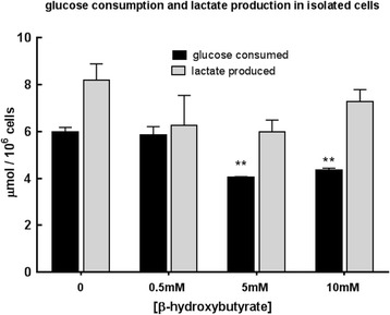 Effect of β-OHB (0, 0.5, 5, 10 mM) on glucose consumption and lactate production (μmol/10 6 cells/24 h) at 24 h when MMTV-NEU-NT cells were incubated in low-glucose (1 g/L) DMEM. N = 3, ** p