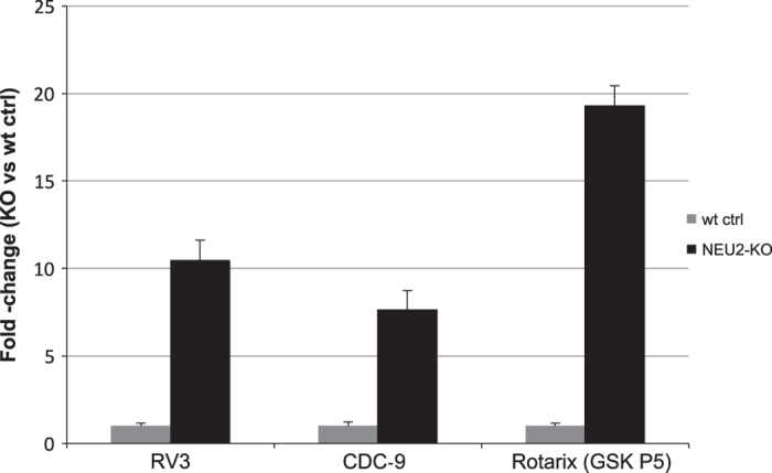 RV replication in NEU2-KO Vero cells. Using the CRISPR-Cas system a functinal NUE2 gene was edited and the RV3, CDC-9 and Rotarix rotavirus strains were evaluated. QPCR was performed in triplicate and the value was normalized to 18s RNA and compared to wild type Vero cell control (wt ctrl). All samples were completed in triplicate ( n =3). The value presented here represents the mean of the triplicates±s.e.m.