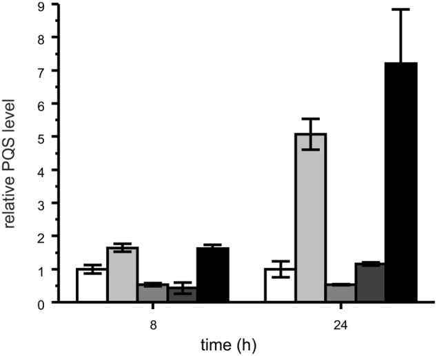 Relative PQS levels in cultures of P. aeruginosa PAO1 (white bars) and co-cultures of P. aeruginosa PAO1 with M. abscessus P4a (light gray), M. abscessus P5a (gray), M. abscessus P13 (dark gray), and autoclaved M. abscessus P13 (black), incubated under shaking at 37°C. Extracts of cultures were analyzed by HPLC. PQS concentrations in P. aeruginosa PAO1 cultures were set as 1 (8 h: 1.79 μM; 24 h: 0.76 μM PQS). Means ± SD of three biological replicates are shown. CFUs of P. aeruginosa PAO1 after 24 h of incubation: PAO1 culture: 1.81 × 10 11 ; PAO1 – P13 co-culture: 1.21 × 10 11 ; PAO1 cultured with autoclaved P13: 1.32 × 10 11 .