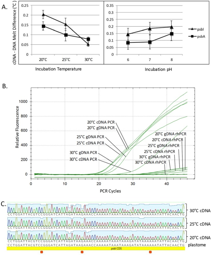 Three follow-up experiments attempting to detect three putative RNA editing sites in the C. vulgaris psbI mRNA. ( A ) Chara was grown in nine different environmental conditions: 20 °C, 25 °C, 30 °C and pH 6, 7, 8, in triplicate, and then DNA + RNA were extracted from each. The melt temperatures for genomic DNA (gDNA) and complementary DNA (cDNA) were determined as paired reactions using high resolution melt analysis. Melt temperature differences between gDNA and cDNA derived amplicons were calculated by subtraction. Data presented on these graphs are the averages of nine observations ± standard error (SE). There were qualitative differences in the cDNA–DNA melt temperatures of psbI and the negative control, psbA , at the different incubation temperatures but these differences were statistically insignificant. Different pH also had no significant effect on the cDNA–DNA melt temperatures and two-way analysis of variance detected no interaction between the temperature and pH for either gene; ( B ) RNase H-dependent PCR (rhPCR) was used in an attempt to detect single base changes between the psbI gDNA and cDNA extracted from Chara incubated in different temperatures. This assay was designed to suppress PCR amplification of the genomic sequence but not cDNA made from an edited transcript. The quantitative PCR (qPCR) amplification curves show that gDNA and cDNA amplified with sigmoidal curves with standard PCR but that both gDNA and cDNA were suppressed by the addition of an rhPCR primer despite the presence of RNase H2 in the reactions. This suggests no editing occurred at any of the tested temperatures; ( C ) cDNAs were PCR amplified and sequenced from total RNA extracted from Chara grown at 20 °C, 25 °C, and 30 °C. The sequences all matched the genomic sequence, suggesting no editing had taken place.