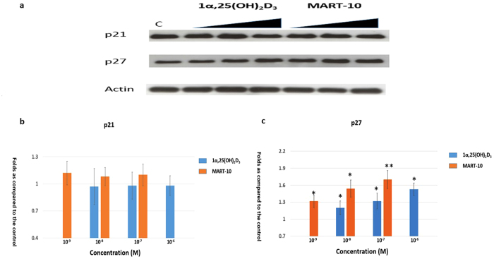 Evaluation of 1α,25(OH) 2 D 3 and MART-10 effect on <t>p21</t> and p27 expressions in SNU308 cells. After two days of treatment (10 −6 to 10 −8 1α,25(OH) 2 D 3 or 10 −7 to 10 −9 M MART-10), p21 and p27 expressions were determined by western blot. ( a ) A western blot showing p21 and p27 expression in SNU308 cells with or without treatment. Actin was used as the loading control. (cropped). ( b ) Quantitative result of western blot. Both 1α,25(OH) 2 D 3 and MART-10 increased p27 expression in SNU308 cells without obvious effect on p21. MART-10 was more effective than 1α,25(OH) 2 D 3 . Each value is a mean ± SD of three to five determinations. *p
