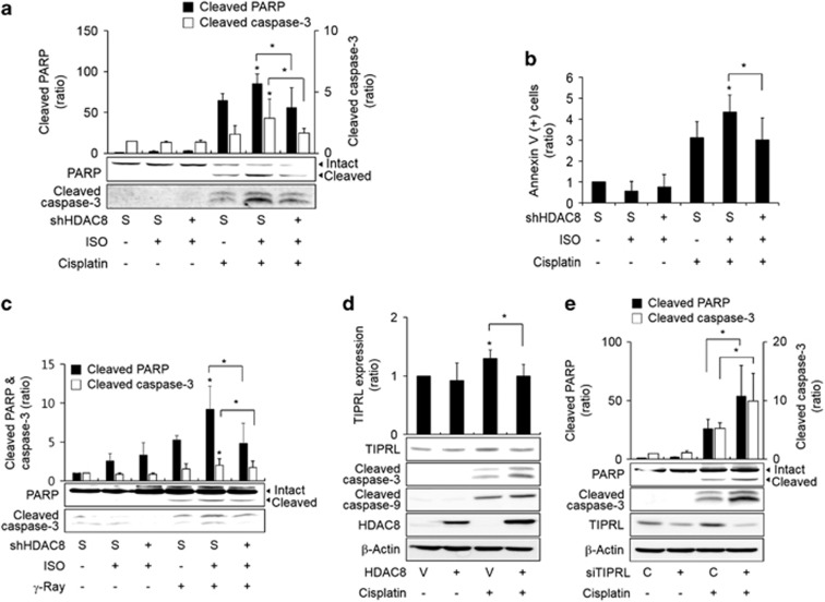 ISO augmented cisplatin-induced apoptosis by increasing HDAC8 expression. ( a ) Effects of ISO and HDAC8 on cisplatin-induced cleavage of caspase-3 and PARP. ( b ) Effects of ISO and HDAC8 on cisplatin-induced annexin V-staining. ( c ) Effects of ISO and HDAC8 on γ-ray-induced cleavage of caspase-3 and PARP. ( d ) Effects of HDAC8 on cisplatin-induced TIPRL expression. ( e ) Effects of TIPRL knockdown on cisplatin-induced cleavage of caspase-3 and PARP. H1299 cells were transfected with wild-type HDAC8, HDAC8 shRNA, scrambled shRNA (S), TIPRL siRNA, control siRNA (C) or the corresponding control vectors (V) and incubated for 24 h. The cells were pretreated with ISO for 30 min (if necessary) and treated with 50 μ M cisplatin. Asterisks (*) on the bar graphs indicate a statistically significant difference compared with the corresponding control ( P