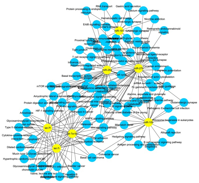Network of abundantly expressed miRNAs and correlative pathways in both DFs and SFs. Yellow nodes represent abundantly expressed miRNAs in common while blue nodes represent the pathways affected by miRNAs.