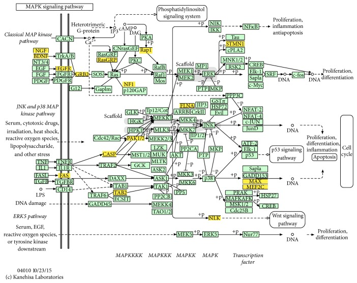 MAPK signaling pathway. This map of MAPK signaling pathway was obtained based on KEGG. The yellow boxes represent target genes which were regulated by the 7 critical miRNAs identified by previous analysis.
