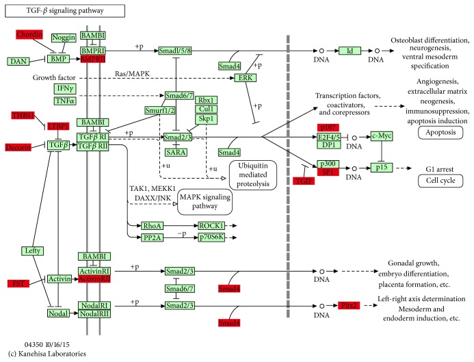TGF- β signaling pathway. This map of TGF- β signaling pathway was based on KEGG where the red boxes represent target genes regulated by significantly differentially expressed miRNAs through predicting results.