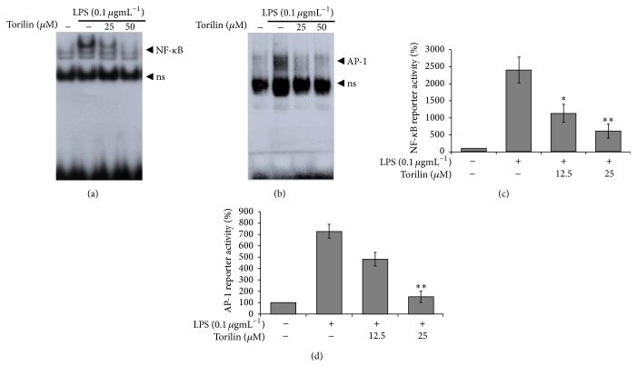 Torilin arrests AP-1 and NF- κ B DNA binding and reporter gene expression in LPS-stimulated RAW 264.7 cells. RAW macrophages were treated with vehicle or torilin (as indicated) and stimulated with LPS for 45 min before nuclear protein was isolated. DNA binding was analyzed using specific γ 32P-labeled oligonucleotide probes for NF- κ B (a) or AP-1 (b). Specificity was demonstrated by coincubation with a 25-fold excess of unlabeled specific probe of NF- κ B and AP-1 for competition. Cells were transiently transfected with NF- κ B (c) or AP-1 (d), plasmids treated with the indicated concentrations of torilin and LPS (100 ngmL −1 ) for 6 h and assayed for CAT expression using a CAT enzyme-linked immunosorbent assay kit. Each column shows the mean ± SEM of quadruplicate determinations. Luciferase activity was normalized to β -galactosidase activity. Images are representative of 3 independent experiments. ∗ P