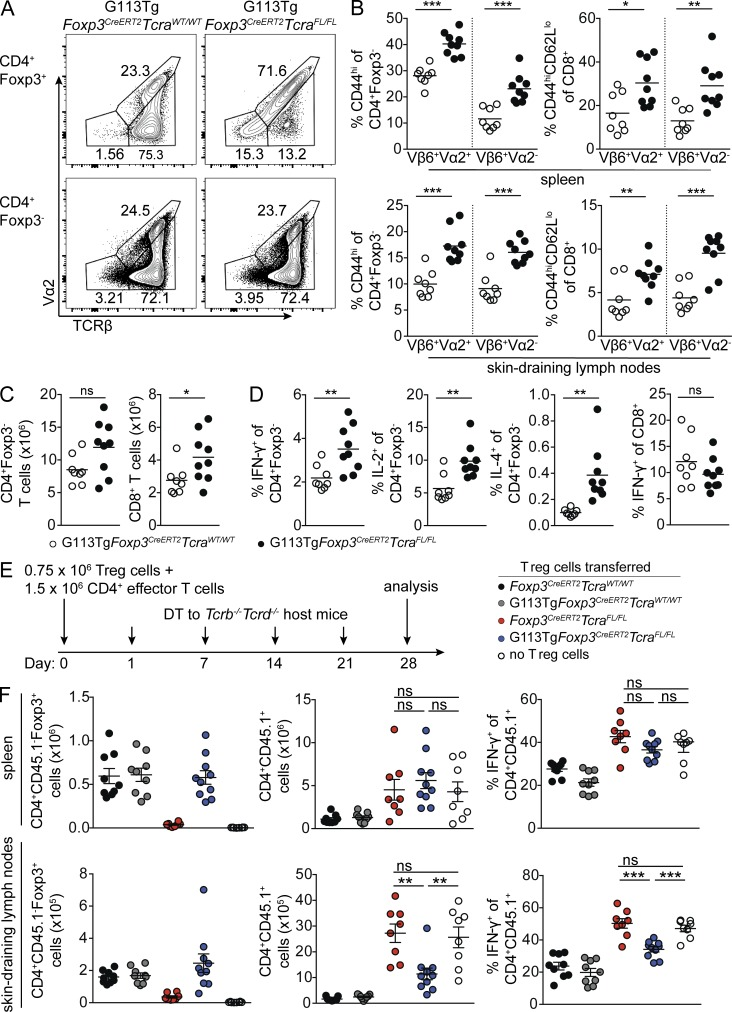 Inducible replacement of the diverse TCR repertoire with the G113 TCR in mature T reg cells. (A–D) G113Tg Foxp3 CreERT2 Tcra WT/WT and G113Tg Foxp3 CreERT2 Tcra FL/FL mice were treated with tamoxifen on days 0, 3, 7, and 10 and analyzed on day 13. (A) Representative flow cytometric analyses of lymph node CD4 + Foxp3 + (top) and CD4 + Foxp3 − (bottom) cells in G113Tg Foxp3 CreERT2 Tcra WT/WT (left) and G113Tg Foxp3 CreERT2 Tcra FL/FL (right) mice. (B) CD4 + Foxp3 − (left) and CD8 + (right) T cell activation in spleens (top) and lymph nodes (bottom) of G113Tg Foxp3 CreERT2 Tcra WT/WT (open circles) and G113Tg Foxp3 CreERT2 Tcrac FL/FL (closed circles) mice. CD4 + Foxp3 − and CD8 + cells were further gated as either Vβ6 + Vα2 + (G113 + ) or Vβ6 + Vα2 − (G113 − ) cells. (C and D) T cell numbers in lymph nodes (C) and cytokine production in spleens (D) of mice of the indicated genotypes, as in B. (E and F) In vivo suppression assay. (E) Schematic of the experiment. T reg cells were sorted from the following mice on day 0 after tamoxifen administration on days −7 and −6: bulk T reg cells from Foxp3 CreERT2 Tcra WT/WT mice (black circles), Vβ6 + T reg cells from G113Tg Foxp3 CreERT2 Tcra WT/WT mice (gray circles), TCRβ − T reg cells from Foxp3 CreERT2 Tcra FL/FL mice (red circles), and Vβ6 + Vα2 + T reg cells from G113Tg Foxp3 CreERT2 Tcra FL/FL mice (blue circles). CD4 effector T cells were isolated on day 0 from CD45.1 + Foxp3 DTR mice treated with DT on days −5, −4, and −1. On day 0, T reg cells and effector CD4 T cells were transferred into Tcrb −/− Tcrd −/− mice subsequently maintained on weekly doses of DT until analysis on day 28. (F) Numbers of CD45.2 − CD4 + Foxp3 + T reg cells (left) and CD45.1 + CD4 + Foxp3 − cells (middle) and percent IFN-γ + CD45.1 + CD4 + cells (right) in spleens (top) and skin-draining lymph nodes (bottom). Each circle represents an individual mouse. The horizontal bars represent mean value. P-values were calculated using unpaired Student's 