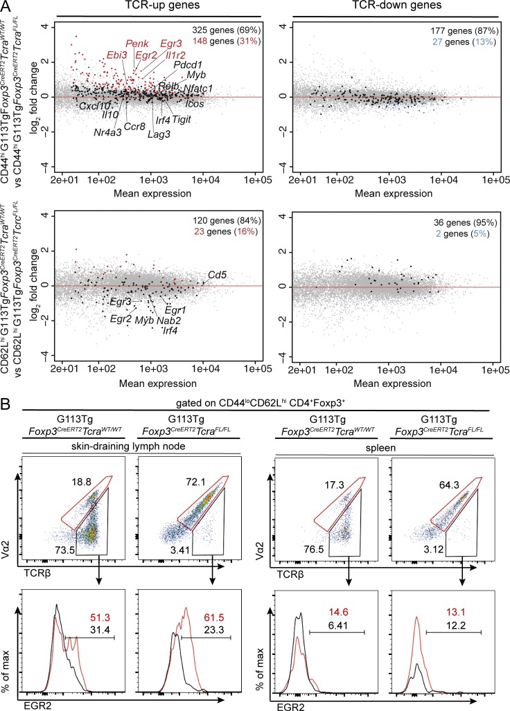 Rescue of the polyclonal TCR-dependent gene signature in T reg cells upon expression of the monoclonal G113 TCR. (A) Foxp3 CreERT2 Tcra FL/WT , Foxp3 CreERT2 Tcra FL/FL , G113Tg Foxp3 CreERT2 Tcra WT/WT , and G113Tg Foxp3 CreERT2 Tcra FL/FL mice were treated with tamoxifen on days 0, 1, and 7, and on day 9, the following populations were sorted from pooled spleens and lymph nodes of the indicated mice: CD44 hi CD62L lo and CD44 lo CD62L hi TCRβ + and TCRβ − eGFP + T reg cells from Foxp3 CreERT2 Tcra FL/WT mice; CD44 hi CD62L lo and CD44 lo CD62L hi TCRβ − eGFP + T reg cells from Foxp3 CreERT2 Tcra FL/FL mice; CD44 hi CD62L lo and CD44 lo CD62L hi Vβ6 + eGFP + T reg cells from G113Tg Foxp3 CreERT2 Tcra WT/WT mice; and CD44 hi CD62L lo and CD44 lo CD62L hi Vβ6 + Vα2 + eGFP + T reg cells from G113Tg Foxp3 CreERT2 Tcra FL/FL mice. Strictly TCR-dependent genes were determined as described in the Rescue of the T reg cell TCR-dependent gene signature by monoclonal G113 TCR expression section of Results and discussion and were analyzed for significantly differential expression in the corresponding T reg cell subsets in G113Tg Foxp3 CreERT2 Tcra WT/WT compared with G113Tg Foxp3 CreERT2 Tcra FL/FL mice. Significantly TCR up-regulated genes (red; left) and TCR down-regulated genes (blue; right) are shown for effector (top) and naive (bottom) T reg cell subsets. Genes not significantly up-regulated (left) or down-regulated (right) are shown in black. All genes are shown in gray. Three replicates of each cell subset were generated, with at least five mice pooled for each replicate. A cutoff of 0.05 was set for the obtained p-values, adjusted using Benjamini-Hochberg multiple testing correction, to identify significant gene expression changes for each comparison. (B) Representative flow cytometric analyses of EGR2 expression in naive Vβ6 + Vα2 − (gates and histograms shown in black) and Vβ6 + Vα2 + (gates and histograms shown in red) T reg cells in pooled cervical, axial, brachia