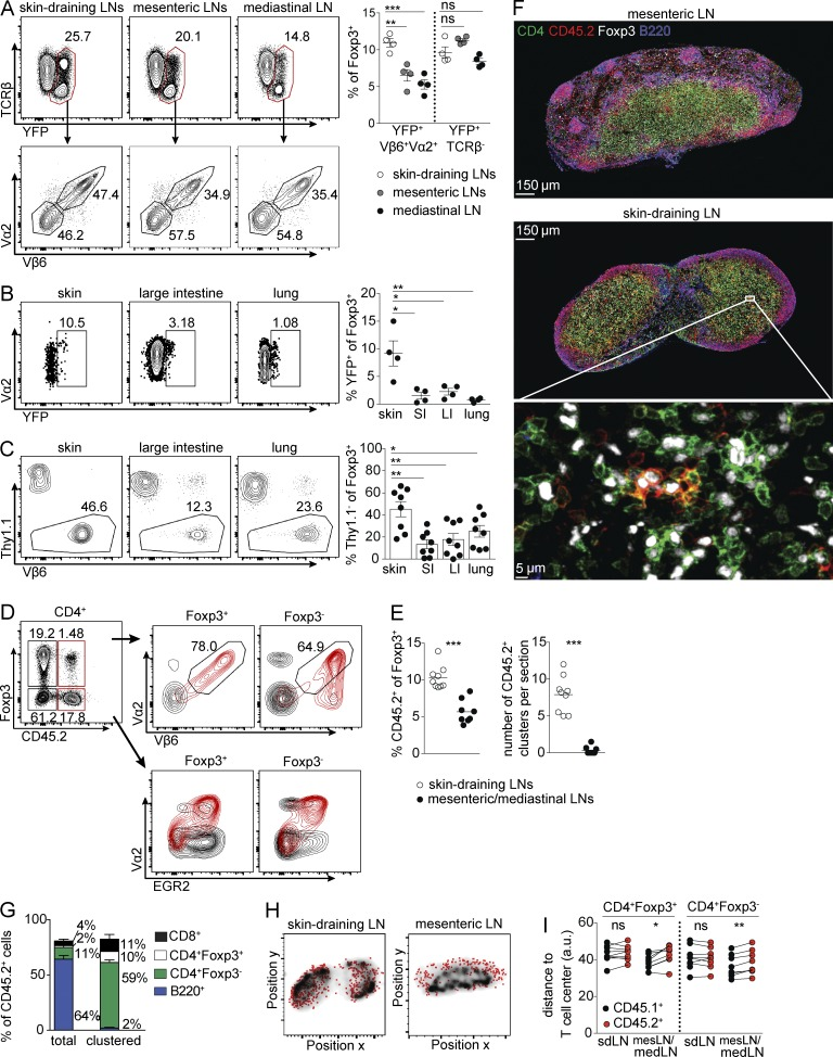Preferential accumulation of G113 TCR-expressing T reg cells in skin and draining lymph nodes. (A) Flow cytometric analyses of CD4 + Foxp3 + cells (top left) in the indicated lymph nodes of female G113Tg Foxp3 CreERT2/YFP-Cre Tcra FL/FL mice. Further gating on YFP + cells is shown below. (Right) The percent YFP + Vβ6 + Vα2 + and YFP + TCRβ − cells among total Foxp3 + cells is quantified. (B, left) Representative flow cytometric analyses of CD4 + Foxp3 + cells isolated from tissues of G113Tg Foxp3 CreERT2/YFP-Cre Tcra FL/FL mice. (Right) Quantification of YFP + cells within the total Foxp3 + cell population. (C) 4 × 10 5 Thy1.1 + cells from Foxp3 Thy1.1 mice, 4 × 10 5 Vβ6 + Vα2 + eGFP + cells from tamoxifen-treated G113Tg Foxp3 CreERT2 Tcra FL/FL mice, and 1.6 × 10 6 CD45.1 + eGFP − cells from CD45.1 + Foxp3 GFP mice were transferred into Tcrb −/− / Tcrd −/− mice analyzed 2 wk later. (Left) Representative flow cytometric analysis of Thy1.1 + and Thy1.1 − (Vβ6 + Vα2 + ) T reg cells in the indicated tissues. (Right) The proportion of Thy1.1 − cells (percentage) among total Foxp3 + cells. (D) Representative flow cytometric analyses from an inguinal lymph node of bone marrow chimeric mice. (Right) Plots of the indicated populations of CD45.2 + (red) and CD45.2 − (black) Foxp3 + (left) and Foxp3 − (right) cells, with gates indicating the percent Vβ6 + Vα2 + cells among CD45.2 + Foxp3 + and Foxp3 − populations. (E) Percent CD45.2 + among Foxp3 + cells (left) and numbers of CD45.2 + clusters per imaged section (right) in skin-draining (open circles) or mesenteric/mediastinal (closed circles) lymph nodes. (F) Representative immunofluorescence staining of lymph nodes as indicated. (G) Percent CD8 + (black bars), CD4 + Foxp3 − (green bars), CD4 + Foxp3 + (white bars), and B220 + (blue bars) cells of CD45.2 + cells in skin-draining lymph nodes (total) or in CD45.2 + clusters (clustered) in skin-draining lymph nodes. Error bars represent ± SEM. (H) Representative images showing 