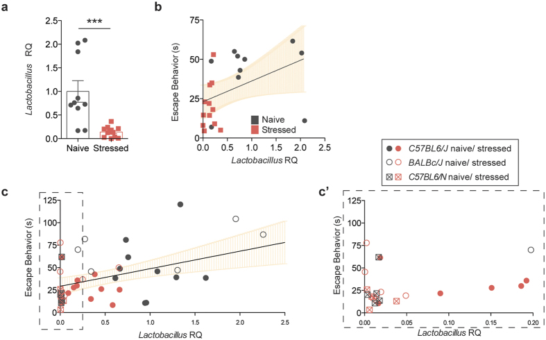 Lactobacillus levels correlate with depressive behavior. ( a ) Lactobacillus quantification in fecal samples by qRT-PCR, relative to 16S rRNA (n = 10 naïve and 11 stressed; representative of 3 independent experiments; two-tailed t-test with Welch's correction, ***p