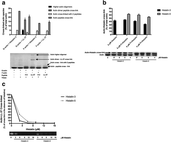 Cross-linking of histatins and LL-37 to CaATP-G-actin and MgF-actin by TGase. Samples were treated with TGase at 22 °C for 30 and run on SDS-PAGE and evaluated by densitometry as described in Methods . Lower panels are representative SDS-PAGE-s. Upper panels are quantitative evaluation of SDS-PAGE-s. a Cross-linking 4 μM G- or F-actin with 8 μM histatin-3 or 6 μM LL-37 by 0.4 mg/ml TGase. b Cross linking 4 μM CaATP-G-actin with 8 μM histatin-3 and histatin-5, 4–8 μM Fl-histatin-3, and Fl-histatin-5 by 0.3 mg/ml TGase. Star (*) on 8 in the lower panel marks unlabeled histatin. 8 μM histatin-5-actin cross-linked product could not be evaluated accurately because of its poor separation from the actin band. c Competition between 6 μM Fl-LL-37 and 0–16 μM histatin-3 or histatin-5 for cross-linking 4 μM CaATP-G-actin. Lower panel , SDS-PAGE visualized by fluorescence
