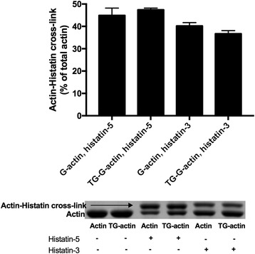 Cross-linking of 4 μM CaATP-G-actin and TGase pretreated CaATP-G-actin (TG-G-actin) with 4.5 μM Fl-histatin-3 and Fl-histatin-5 by 0.3 mg/ml TGase at 22 °C for 30 min. Preparation of TG-G-actin: 108 μM CaATP-G-actin was incubated with 4 mg/ml TGase at 4 °C for 24 h. After cross-linking samples were run on SDS-PAGE and evaluated by densitometry. Upper panel quantitative evaluation of SDS-PAGE by densitometry. Lower panel representative SDS-PAGE visualized by Coomassie blue