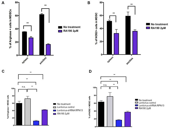 Arginase and iNOS levels in MDSCs isolated from spleen and tumor microenvironment following RA190 treatment or RPN13 knock down in vitro ( A and B ) MDSCs from spleens and ascites of ID8-Luc tumor-bearing mice were treated with or without RA190 (2 μM) in vitro for 24 hours. The levels of Arginase and iNOS were assessed by flow cytometry. (A) Bar graph showing arginase expression in CD11b + Gr1 + cells isolated from spleen and ascites. (B) Bar graph showing iNOS expression in CD11b + Gr1 + cells isolation from spleen and ascites. ( C and D ) Lentivirus expressing Rpn13 shRNA was used to infect MDSCs and knock down Rpn13 expression. Arginase and iNOS expression in MDSCs receiving no treatment, infected with lentivirus expressing control shRNA, infected with lentivirus expressing Rpn13 shRNA, or treated with RA190 (2 μM) were assessed by flow cytometry. (C) Bar graph showing the percentage of arginase expressing CD11b+Gr-1+ cells in different groups. (D) Bar graph showing the percentage of iNOS expressing CD11b+Gr-1+ cells in different groups. Values are shown as mean ± SD (* P = 0.05, ** P = 0.01, ns, not significant).