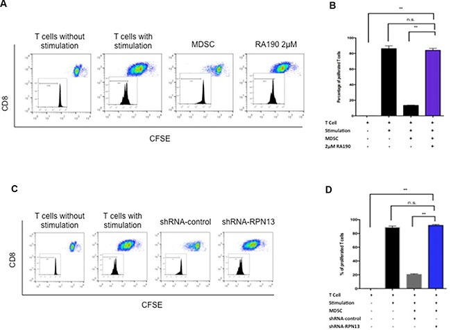 T cell proliferation after co-culturing with MDSCs treated with RA190 or RPN13 knock down in vitro . ( A and B ) OT-1 T cells stimulated by SIINFEKL peptide loaded on irradiated TC-1 cells were labeled with CFSE, and then co-cultured with RA190-treated MDSCs. (A) Representative flow cytometry of T cell proliferation as measured by CFSE dilution in unstimulated T cells, stimulated T cells, stimulated T cells co-cultured with MDSCs, and stimulated T cells co-cultured with RA190-treated MDSCs. (B) Bar graph depicting the percentage of proliferated OT-1 T cells. ( C and D ) OT-1 T cells stimulated by SIINFEKL peptide loaded on irradiated TC-1 cells were labeled with CFSE, and then co-cultured with Rpn13 knocked down MDSCs. (C) Representative flow cytometry of T cell proliferation measured by CFSE dilution in unstimulated T cells, stimulated T cells, stimulated T cells co-cultured with MDSCs infected with control shRNA, and stimulated T cells co-cultured with MDSCs infected with Rpn13 shRNA. (D) Bar graph showing the percentage of proliferated T cells in various treatment groups. Values are shown as mean ± SD (* P = 0.05, ** P = 0.01, ns, not significant).