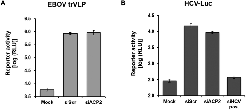 ACP2 is not required for the replication of Ebola or hepatitis C viruses. ACP2 depletion has no effect on the replication of Ebola virus ( A ) or hepatitis C virus ( B ). 293 T cells or Huh7.5 cells were transfected with the corresponding siRNAs and then infected with Ebola-trVLPs or HCV- luc , respectively, after 48 hours. At 72 hours post-infection, replication of each virus was quantified by measuring Renilla luciferase activity. Data are represented as the mean ± SD of three independent experiments.