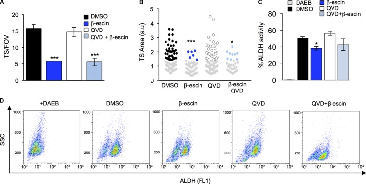 Preventing apoptosis does not halt β-escin action on glioblastoma-initiating cells ( A ) Pre-treatment of mesenchymal GIC#1 with the caspase inhibitor QVD does not alter β-escin induced decreases in TS formation. ( B ) TS size in response to QVD and β-escin treatment. ( C – D ) Addition of QVD in combination with β-escin did not rescue the β-escin induced reduction in TS formation or ALDH activity. Data are representative of 3 independent experiments, * p