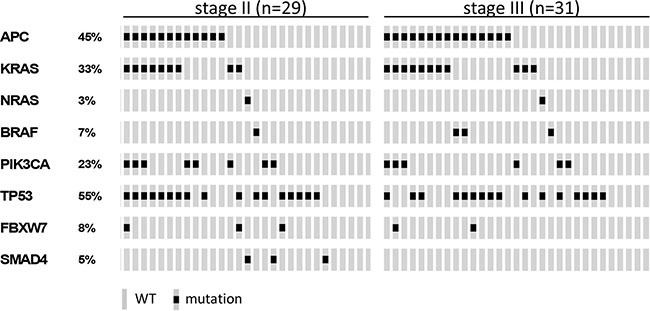 Oncoprint visualizing the gene mutation status of APC , KRAS , NRAS , BRAF , PIK3CA , TP53 , FBXW7 and SMAD4 assessed by <t>TruSeq</t> <t>Amplicon</t> Cancer Panel TSACP analysis for stage II ( n = 29) and stage III ( n = 31) colon cancers The rows indicate the gene mutation status of the 60 samples (grey bars) and the black spots depict mutations.