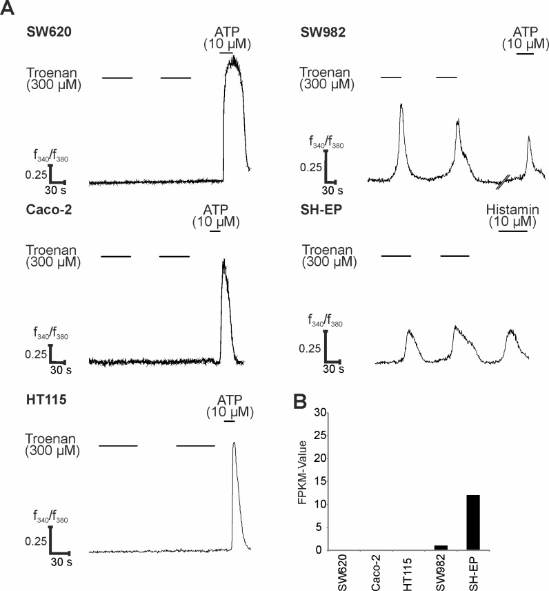 Effect of Troenan application on different cancer cell lines. (A) Calcium signals upon Troenan application (300 μM) in the cancer cell lines SW620, Caco-2, HT115, SW982 and SH-EP. N = 3 with n = 6 measurements in 3 cell culture dishes with approximately 200 cells. (B) RNA-Seq data analysis for all cell lines. Bar chart showing the FPKM values in five different cell lines.