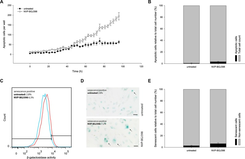 Treatment with NVP-BGJ398 does not induce NRH-LS1 cells to undergo <t>apoptosis</t> or senescence in a manner to account for the reduced cell number ( A ) The number of cells with active caspase 3/7 during 96 h of treatment with 100 nM of NVP-BGJ398. ( B ) The percentage of apoptotic cells after treatment with NVP-BGJ398; shown one representative experiment ( n = 3), error bars represent the standard error (SE) of the final measurement. ( C ) Increase in SA-β-galactosidase activity between cells treated with 100 nM of NVP-BGJ398 (red) and untreated (DMSO) cells (blue). Representative flow cytometry histograms of n = 3 biological replicates shown. ( D ) Representative image of SA-β-galactosidase staining after 72 h of treatment with 100 nM NVP-BGJ398. Senescent cells marked with arrows. Scale bars represent 50 μm. ( E ) The percentage of senescent cells after treatment with NVP-BGJ398 based on flow cytometry assay ( n = 3), error bars represent the standard deviation (SD) from three independent experiments.
