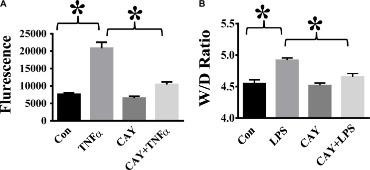 HDAC6 inhibition alleviates TNF-α-induced endothelial hyper-permeability and lung edema in endotoxemia ( A ) HPAECs were pre-treated with CAY10603 (CAY, 0.1 μM) for 6 h, then challenged with TNFα (20 ng/ml) for 18 h. Cells were divided into 4 groups: Control (Con), TNF-α alone (TNFα), CAY10603 alone (CAY), and TNF-α+CAY10603 (TNFα+CAY). TNF-α-induced endothelial permeability to FITC-Dextran was measured ( n = 4). * P