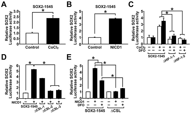 Hypoxia and NOTCH1 signaling increase SOX2 promoter activity A. SOX promoter activity in adherent A2780 cells after CoCl 2 treatment (100 μM, 48 h) is shown. Data indicate mean ± SD (n=4). *, P