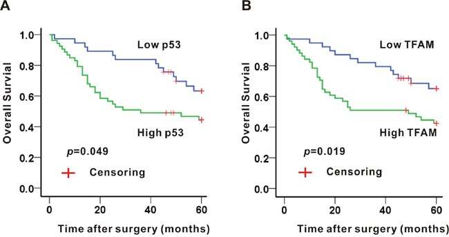 Association of p53 A. or TFAM B. expression and 5-year survival in colon adenocarcinoma tissues.