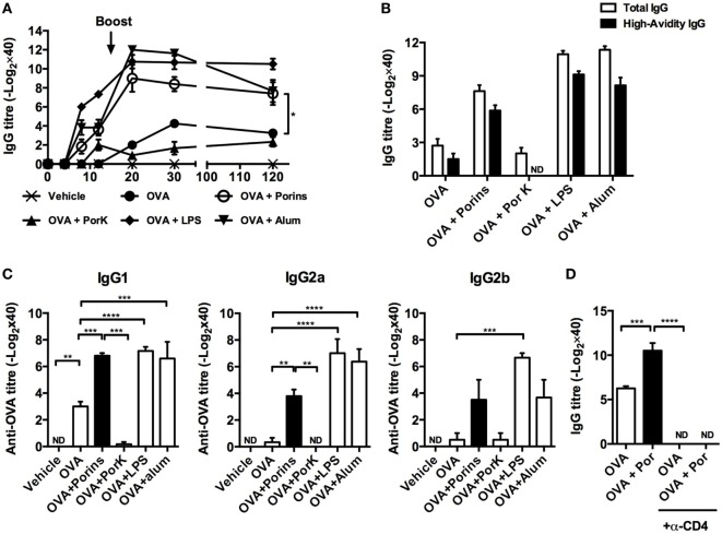 OmpC and OmpF from S . Typhi promote antibody responses to ovalbumin (OVA) . Four BALB/c mice per group were immunized i.p. with 100 μg of OVA, OVA + 10 μg of porins, OVA + 10 μg of PorK, OVA + 5 μg of LPS, or OVA + 100 μg of alum. (A) Total <t>IgG</t> antibody responses were measured at the indicated time points by ELISA (B) high-avidity IgG and (C) IgG1, IgG2a, and IgG2b were measured at day 30 post-immunization. (D) BALB/c mice were injected i.p. with a depleting anti-CD4 mAb (GK1.5) 3 days prior to immunization with OVA or OVA + porins. GK1.5 mAb was given every 3 days thereafter until day 20, and the serum IgG and <t>IgM</t> responses were measured by ELISA. Mean + SEM are shown. These data are representative of three independent experiments. Statistical analysis was performed using one-way ANOVA with Bonferroni test post hoc . For panel (A) , Student's t -test was performed comparing only OVA versus OVA + porins groups. Statistical differences are depicted as * P