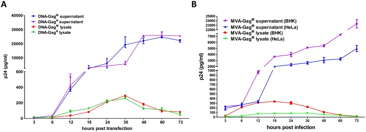 p24 Gag production by: ( A ) DNA vaccines in HEK cells. HEK cells were transfected with 4μg of DNA-Gag M or DNA-Gag N and samples taken at the indicated time points. ( B ) Recombinant MVA in BHK-21 and HeLa cell lines. Permissive (BHK-21) and non-permissive (HeLa) cell lines were infected at an MOI of 0.1 with MVA-Gag M and samples taken at the indicated time points. Gag p24 was detected using an ELISA assay.