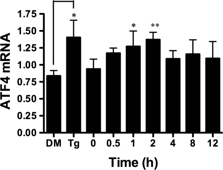 BA induces an increase in ATF4 transcription in DU-145 cells. Ten micromoles of BA induced a significant increase in ATF4 mRNA 1 ( p = 0.031, n = 4) and 2 h ( p = 0.005, n = 4) post-treatment. One micromole of <t>thapsigargin</t> (Tg) and DMSO vehicle (DM) was used as a positive control and significantly induced ATF4 mRNA, p