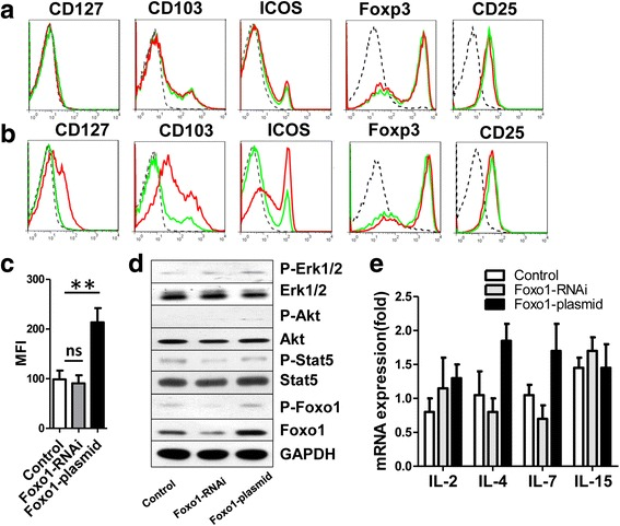 Detection of cell surface molecules and signaling pathway molecules after knockdown and over-expression of Foxo1 in Treg cells. a , Representative expression of the Foxo1, CD127, CD103, ICOS, Foxp3 or CD25 in Treg cells 48 h after transfection with Foxo1 siRNA by flow cytometry (broken black line: isotype, green line: control, red line: Foxo1 siRNA). b Representative expression of the Foxo1, CD127, CD103, ICOS, Foxp3 or CD25 in Treg cells 48 h after transfection with over-expression plasmid of Foxo1 by flow cytometry (broken black line: isotype, green line: control, red line: Foxo1 over-expression). c Detected of Median Fluorescence Intensity (MFI) for CD127 in Treg cells 48 h after transfection with Foxo1 siRNA and Foxo1 over-expression plasmid by flow cytometry. d Representative western blot of p-Erk1/2, total Erk1/2, p-Akt, total Akt, p-Stat5, total Stat5, p-Foxo1 and total Foxo1 in Treg cells 48 h after transfection with Foxo1 siRNA and over-expression plasmid of Foxo1, GADPH was used as a control. Treg cells stimulated with anti-CD3 (0.01 μg/ml) and anti-CD28 (1.0 μg/ml) in medium during culture. e Expression of mRNA for IL-2, IL-4, IL-7 and IL-15 in Treg cells, 48 h after transfection with Foxo1 siRNA and Foxo1 over-expression plasmid. All experiments were repeated at least three times. ** P