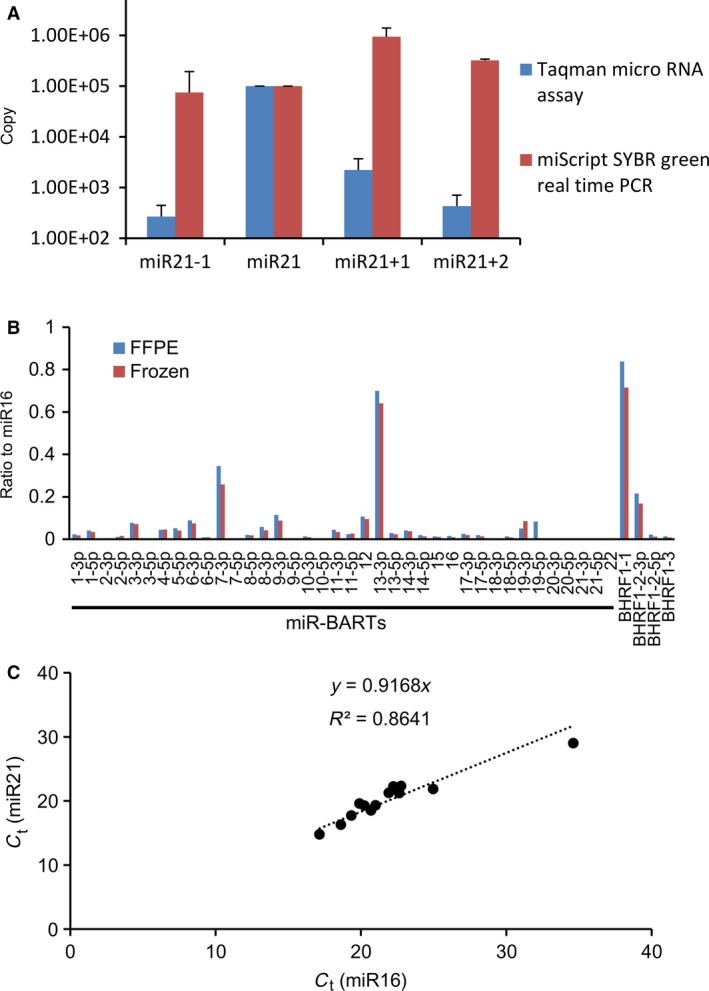 Conditions of real‐time PCR . (A) Detection of mature mi RNA with deletion or addition in the 3′ end by real‐time RT ‐ PCR . A total of 1 × 10 5 copies of synthesized miR21, miR21 with deletion (miR21‐1), miR21 with addition of single nucleotide (miR21 + 1), and miR21 with addition of two nucleotides (miR21 + 2) in the 3′ end of mature mi RNA were examined with the miScript PCR system (miScript SYBR green real‐time PCR ) and stem‐loop real‐time RT ‐ PCR (Taqman micro RNA assay). Error bars indicate standard error for triplicate analyses. (B) Comparison of formalin‐fixed paraffin‐embedded ( FFPE ) and frozen samples by real‐time RT ‐ PCR . miR‐ BART s and miR‐ BHRF 1s were quantified by the miScript PCR system. FFPE and frozen samples were obtained from xenotropically inoculated lymphoma tissues in severe combined immunodeficiency mice. (C) Cycle thresholds (Ct) for miR16 and miR21. The copy numbers of two cellular mi RNA s, miR16 and miR21, were measured and plotted in 12 representative clinical samples using the miScript PCR system. Linear approximation line (broken line) and correlation coefficient (R 2 ) are indicated.