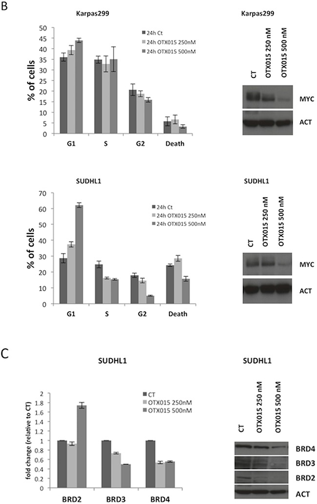 OTX015 modulates MYC and BRD expression A. MYC mRNA and protein levels were reproducibly down-regulated after 72-h OTX015 exposure (100 - 1000 nM) in ALK+ cell lines by qRT-PCR and Western blot respectively. CT, DMSO-treated controls. B. 24 h exposure to OTX015 (250, 500 nM) led to dose-dependent down-regulation of MYC protein levels and G1 cell cycle arrest. β-actin was used as a protein loading control. C. 24 h exposure to OTX015 resulted in down-regulation of BRD2, BRD3 and BRD4 RNA and protein levels by qRT-PCR and Western blot. β-actin was used as a protein loading control.