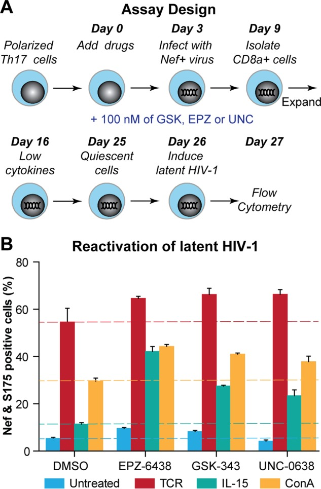 EZH2 and EHMT2 are required for the establishment of latent HIV-1 in primary Th17 cells. (A) Experimental design. (B) Reactivation of latent proviruses by Dynabeads Human T-Activator CD3/CD28, IL-15 (50 ng/ml), or ConA (5 µg/ml) in cells pretreated with DMSO, 100 nM GSK-343, EPZ-6438, or UNC-0638.
