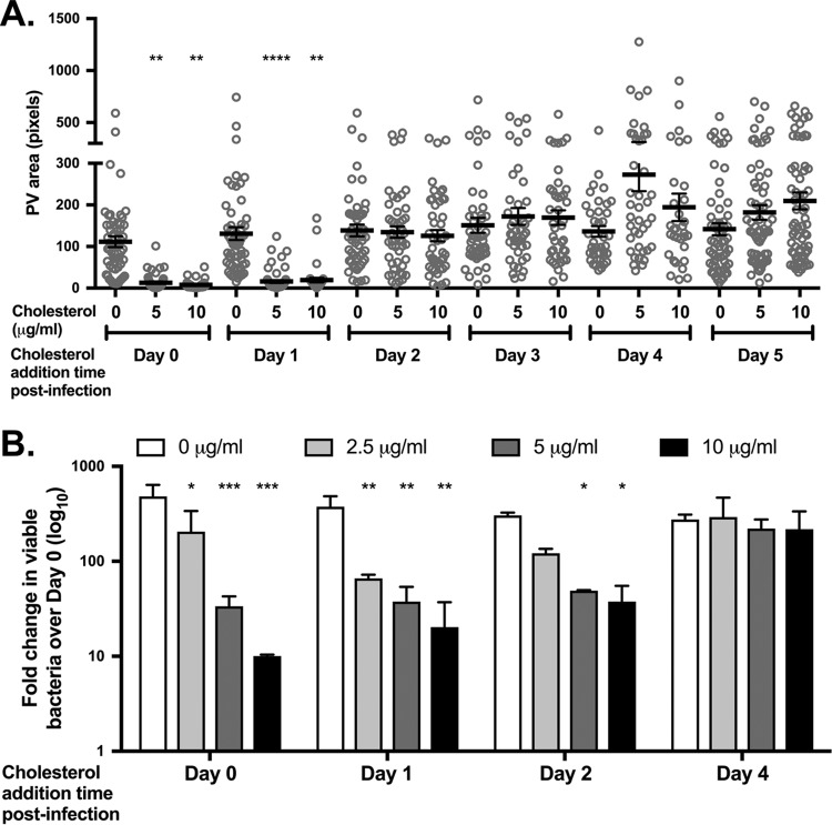 C. burnetii growth is sensitive to cholesterol during early stages of PV biogenesis. (A) Final PV size after adding cholesterol at various times postinfection in MEFs. Cholesterol-free MEFs were infected with C. burnetii and different cholesterol concentrations were added to the cells each day from day 0 to 5. At day 6, cells were fixed and stained for the PV marker LAMP-1 and C. burnetii , and PV size was measured using ImageJ. At least 20 PVs were measured for each condition for three independent experiments. Each circle indicates the value for an individual PV. The means (black bars) ± SEM (error bars) from three individual experiments are shown. Statistical significance was determined by comparing values to the value with no cholesterol by one-way ANOVA with Dunnett's posthoc test and indicated as follows: **, P