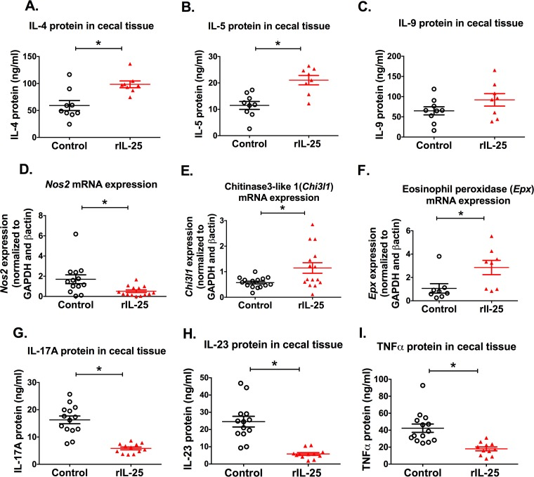 rIL-25 administration increased type 2 responses and suppressed inflammatory responses in E. histolytica -challenged mice. Cecal tissue was collected from rIL-25- or PBS-treated mice 7 days after E. histolytica challenge, and the cytokines IL-4, IL-5, IL-9, IL-17, IL-23, and TNF-α were measured by ELISA (A to C and G to I). <t>Cytokine</t> concentrations were normalized to total protein concentration. Inducible nitric oxide synthase ( Nos2 ), chitinase 3-like 1 ( Chi3l1 ), and eosinophil peroxidase ( Epx ) mRNAs were measured from cecal tissue of E. histolytica -challenged mice with or without rIL-25 treatment (D to F) after 1 day of E. histolytica challenge. *, P