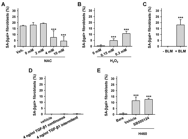 Effect of oxidative stress and exogenous TGF-β1 on fibroblast senescence induction by LCC cells A. Average percentage of SA-βgal+ CCD-19Lu fibroblasts co-cultured with H460 in the presence of increasing doses of the antioxidant NAC or vehicle. B, C. Average percentage of SA-βgal+ CCD-19Lu fibroblasts in response to direct or indirect oxidative stress elicited by (B) 2h treatment of H 2 O 2 followed by 4 days of recovery or (C) 9 day treatment with bleomycin (BLM). D. Average percentage of SA-βgal+ CCD-19Lu fibroblasts daily treated with TGF-β1-continuously or intermitently for 4h/day as in [ 8 ]- for 2 weeks. E. Average percentage of SA-βgal+ CCD-19Lu fibroblasts co-cultured with H460 in the presence 5 μM of the TGF-β pathway inhibitor SB505124 for 9 days. All results correspond to two replicates from at least three independent experiments. All pair-wise comparisons were performed with respect to Bare or vehicle.